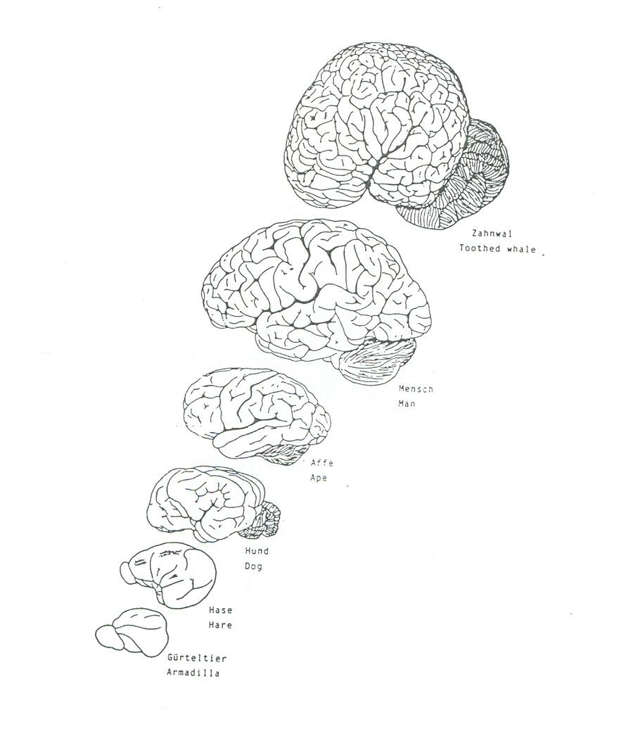 Meeresakrobaten | Delfin-Gehirn und tierische Intelligenz
