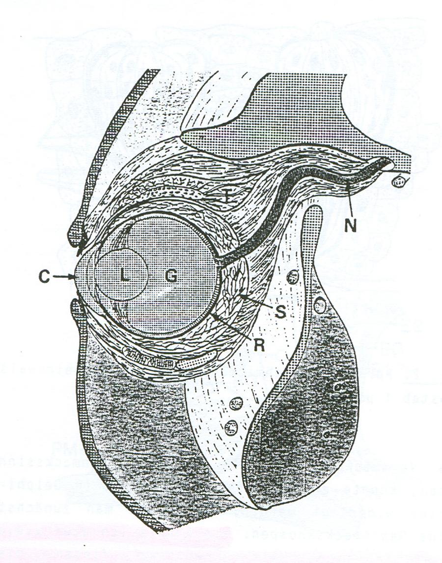 Gemütlich Pottwal Anatomie Bilder - Menschliche Anatomie Bilder ...