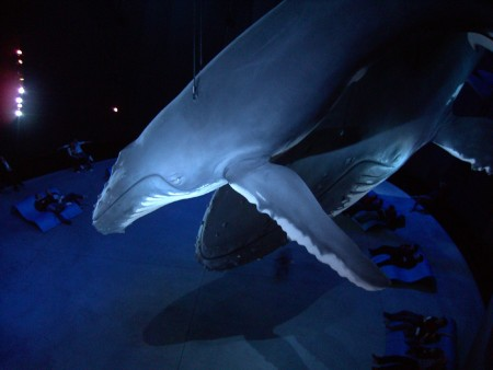 Buckelwal im Ozeaneum (Foto: Susanne Gugeler)