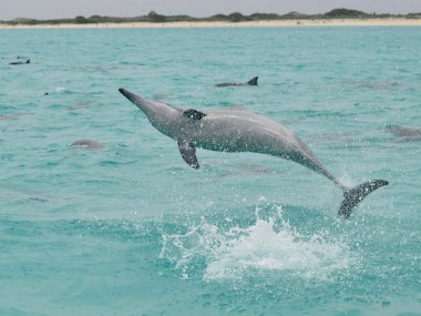 Spinnerdelfin/Midway/Hawaii (Foto: Brigitte Fugger)