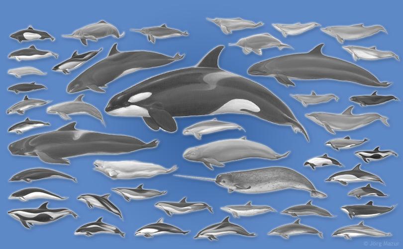 meeresakrobaten ein promi im einsatz f r delfine. Black Bedroom Furniture Sets. Home Design Ideas