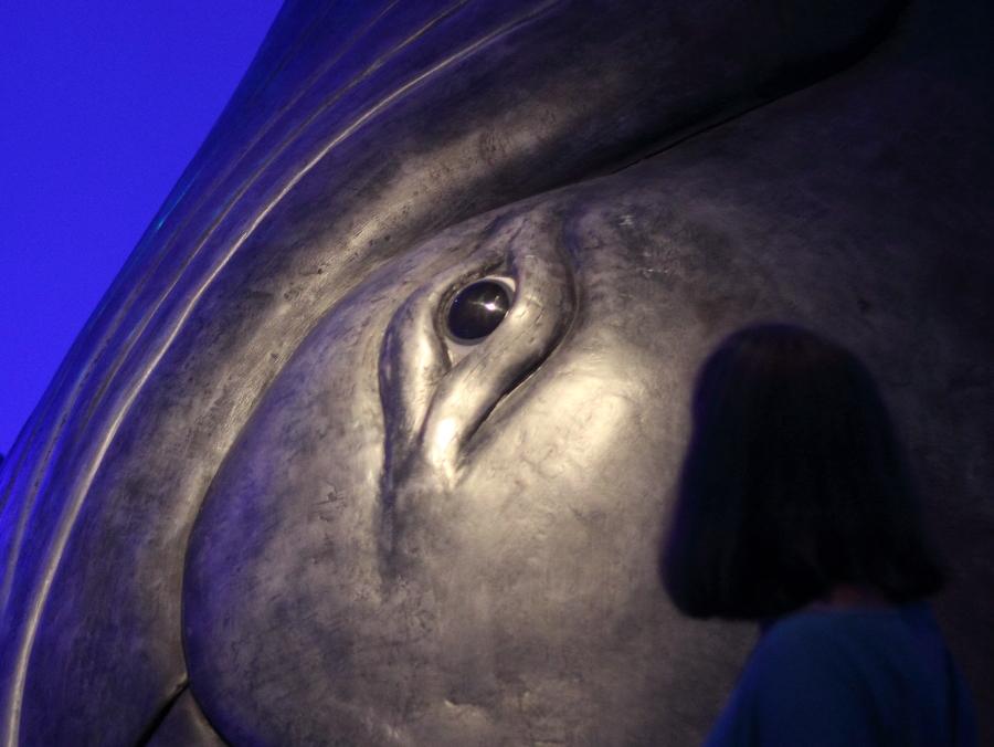 Auge eines Buckelwals - LWL-Museum, Münster (Foto: Rüdiger Hengl)