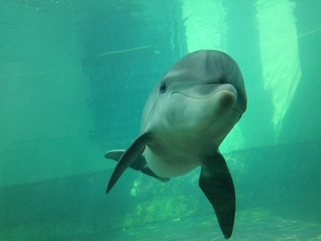 SOMMER (Foto: Dolphin Research Center)