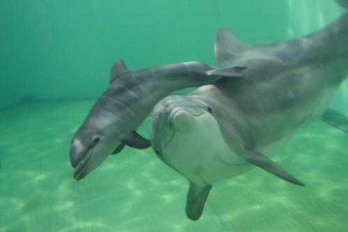 delfinshow spiele