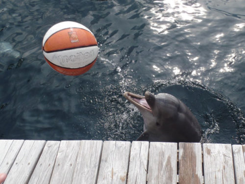 Nami aus dem Nürnberger Tiergarten spielt mit Besucher Ball. (Foto: Oliver Schmid)
