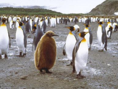 Pinguine in der Antarktis (Foto: Frank Blache)