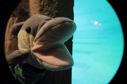 """FINN war in der """"Wasserabteilung"""" des Leipziger Zoos. (Foto: Rüdiger Hengl)"""