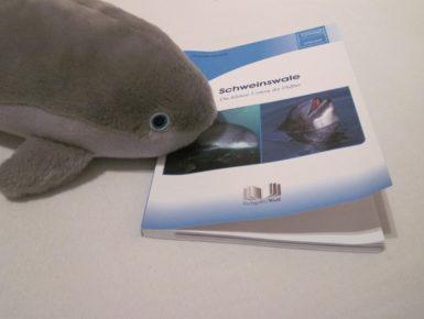 Schweinswale - Die kleinen Vettern der Delfine (Foto: Susanne Gugeler)